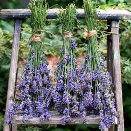 Drying-English-Lavender-square3-Medium
